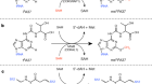 Structural basis for tRNA methylthiolation by the radical SAM enzyme MiaB
