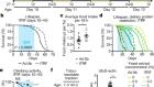 Circadian autophagy drives iTRF-mediated longevity