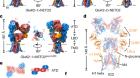 Kainate receptor modulation by NETO2