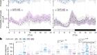 Sensory processing during sleep in Drosophila melanogaster
