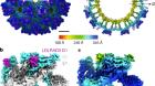 Structure of Venezuelan equine encephalitis virus in complex with the LDLRAD3 receptor