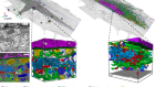 Whole-cell organelle segmentation in volume electron microscopy