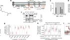 A pan-serotype dengue virusinhibitor targeting the NS3–NS4Binteraction