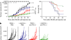 Metabolic modulation of tumours with engineered bacteria for immunotherapy