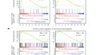 Glycogen metabolism links glucose homeostasis to thermogenesis in adipocytes