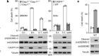 Shigella evades pyroptosis by arginine ADP-riboxanation of caspase-11