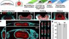 Human neural tube morphogenesis in vitro by geometric constraints