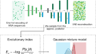 Disease variant prediction with deep generative models of evolutionary data