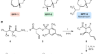 A synthetic antibiotic class overcoming bacterial multidrug resistance