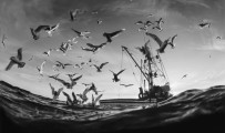 Protect the high seas from harm