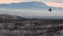 Tree rings reveal increased fire risk for southwestern US