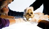 The past, present and future of human evolution