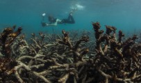 Great Barrier Reef saw huge losses from 2016 heatwave