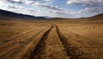 Grassland plants show surprising appetite for carbon dioxide