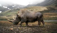 Big data little help in megafauna mysteries