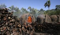 Deforestation ticks up in Brazil's savannah