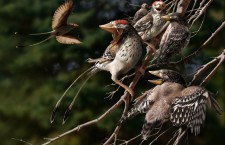 Early birds may have been too hefty to sit on their eggs