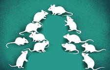 The mice with human tumours: Growing pains for a popular cancer model