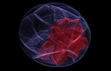 CRISPR 'barcodes' map mammalian development in exquisite detail
