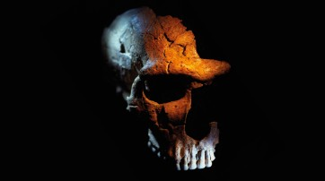 The not-so-dangerous lives of Neanderthals