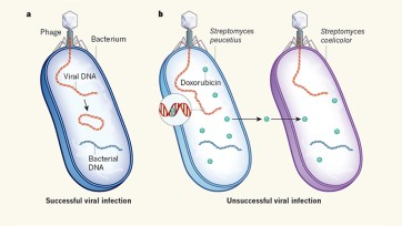 Bacterial defence molecules target viral DNA