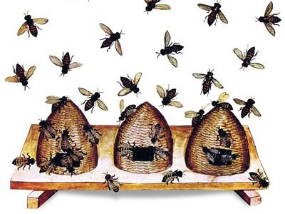Darwinian bee-keeping: lessons from the wild