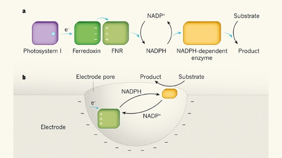 Enzymes trapped and zapped for use outside cells