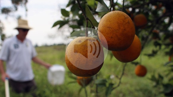 Podcast: Antibiotics in orchards, and rethinking statistical significance