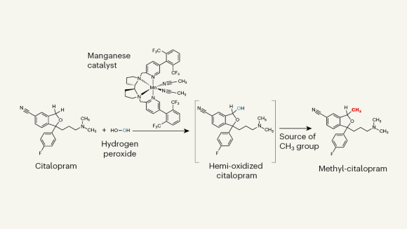 Manganese catalyst enables exploration of the magic methyl effect