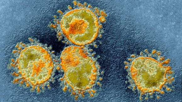 Should virus-naming rules change during a pandemic? The question divides virologists