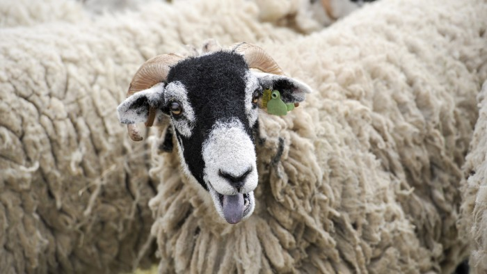 Sheep are one of many mammals that make 'bleating' type noises.