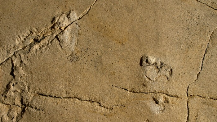 Tracks found on Crete are unusually clear for their age, but their interpretation is anything but.