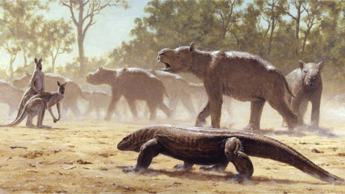 Diprotodon optatum is the largest marsupial known to have existed.