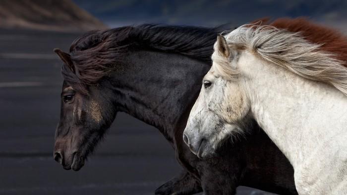 Where the Horses Run: Book I, Mass Extinction