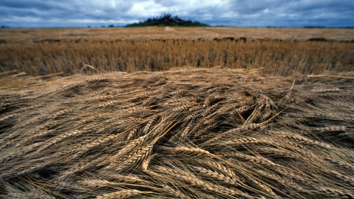 Scientists finally complete wheat genome : Research Highlights