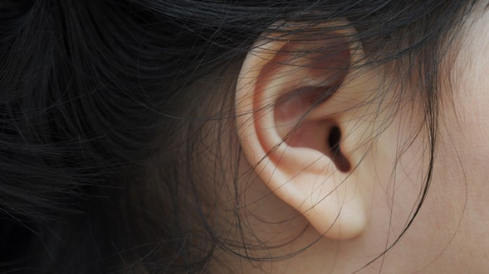 Ear lobes are regulated by multiple genes