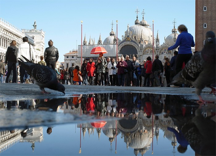 People and birds in front of the Basilica di San Marco, Venice.