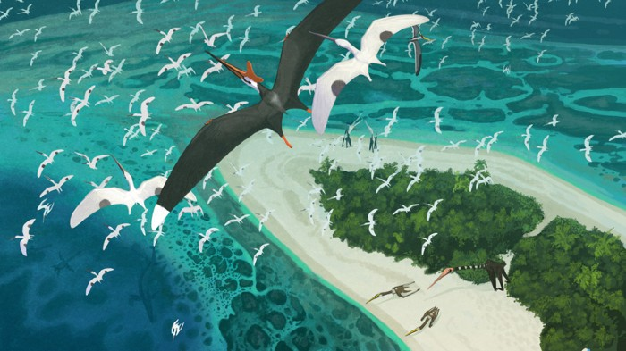 Artists impression of Late Cretaceous Moroccan Pterosaurs