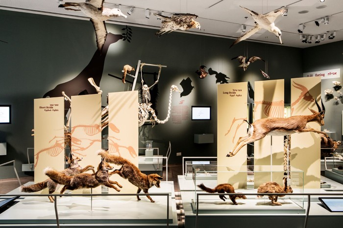 Animal specimens can be seen leaping, flying and grasping frames showing how their bodies and muscles have adapted to survive