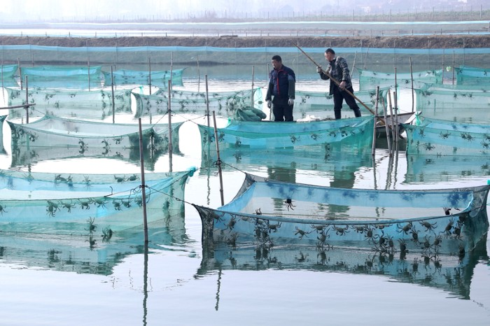 Cultivators check crab nets on a lake