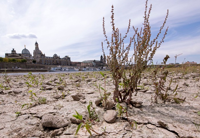 Plants growing from the dried out riverbed of Elbe. In the background can be seen churches and buildings of Dresden