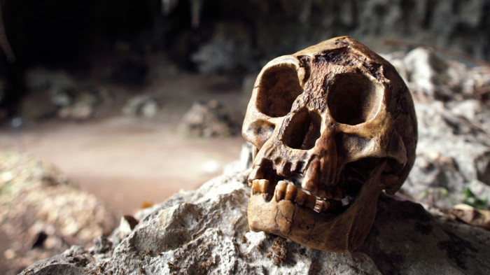 Reconstructed Homo floresiensis skull in Liang Bua cave, Indonesia