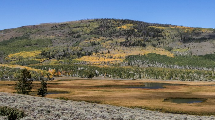 The Pando aspen clonal colony