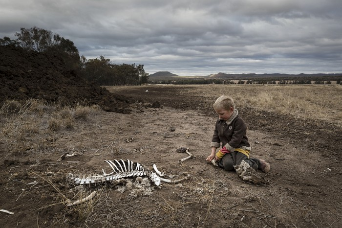 Harry Taylor, 6, plays with the bones of dead livestock.