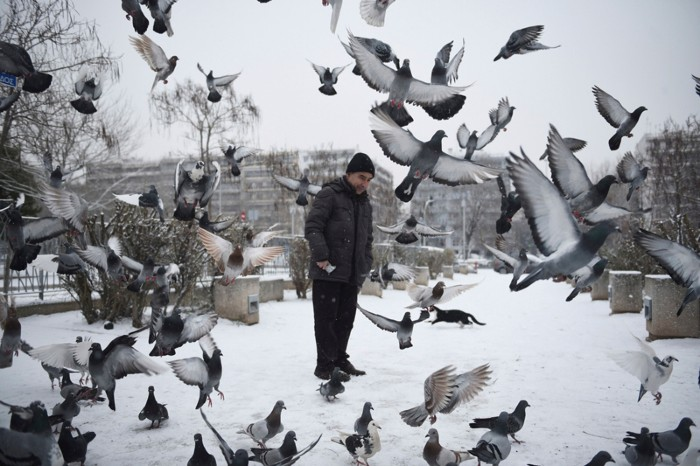Pigeons fly in front of a man after a snowfall in Thessaloniki