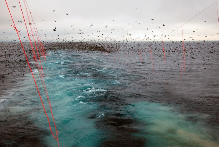 Streamer lines on a fishing boat stop seabirds getting tangled