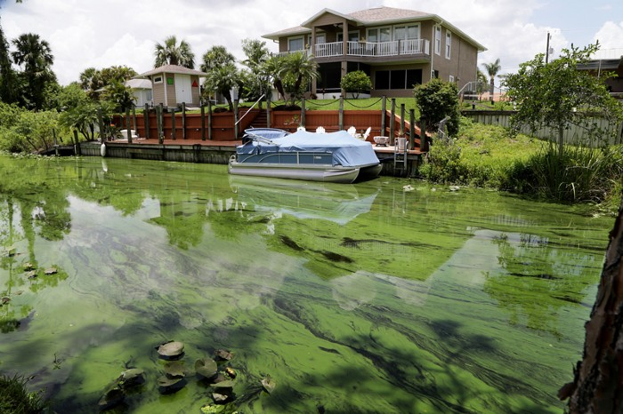 Algae bloom in canal