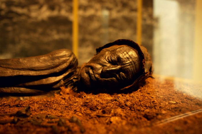 The preserved head and shoulders of the Tollund man