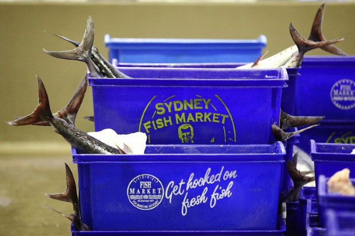 "Fish tails sticking out of blue containers labelled ""Sydney Fish Market"" and ""Get hooked on fresh fish"""
