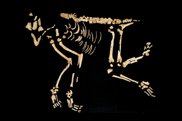The skeleton of a rhesus macaque buried in a cemetery in the ancient settlement of Shahr-i Sokhta, Iran